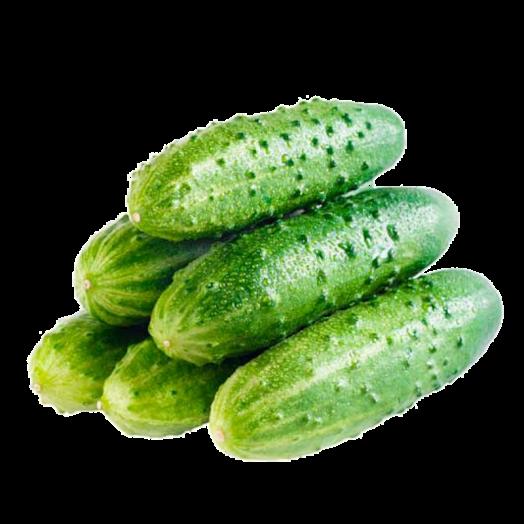 Огірок короткоплідний 100г